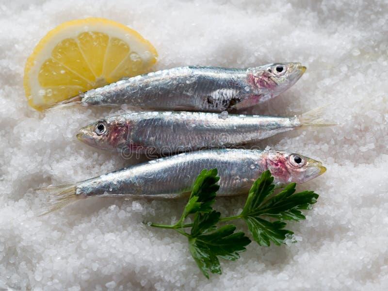 Sardines fraîches au-dessus de sel photos stock