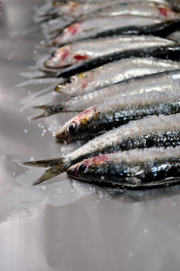 Sardines fraîches avec du sel photos stock