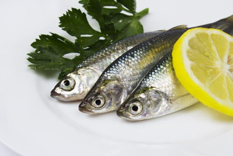 Sardines fraîches avec le citron images libres de droits