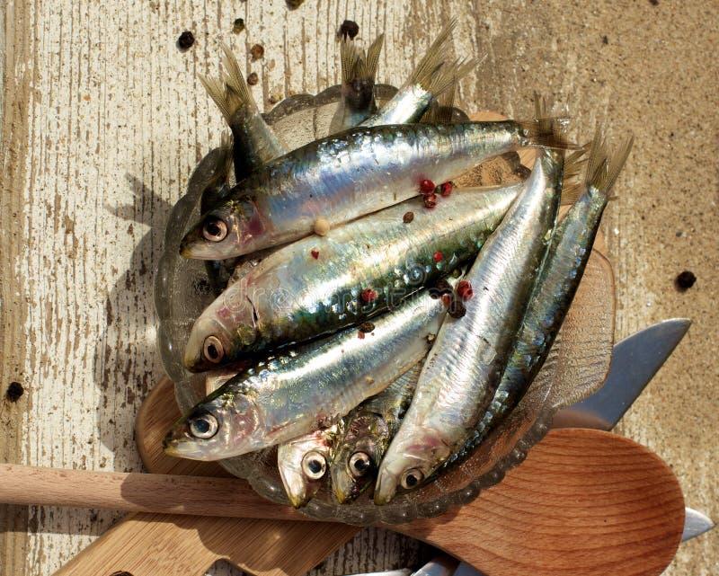 Sardines fraîches crues photo stock