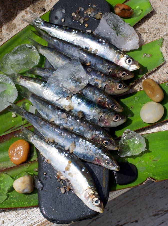 Sardines fraîches crues photographie stock