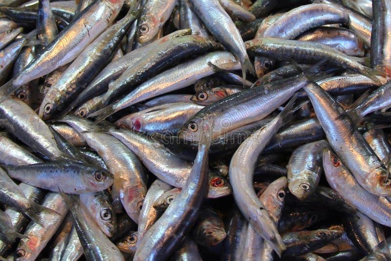 Sardines fraîches de marché de poissons image libre de droits