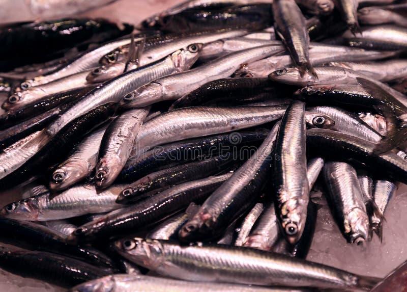 Sardines fraîches de mer sur la glace images libres de droits
