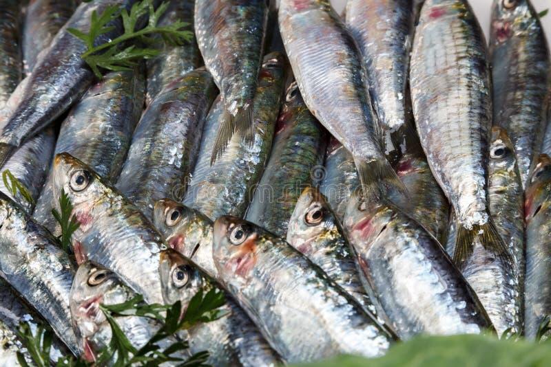 Sardines fraîches et crues images stock