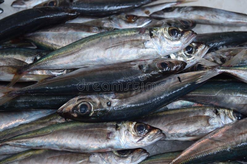 Sardines fraîches sur la poissonnerie photos libres de droits