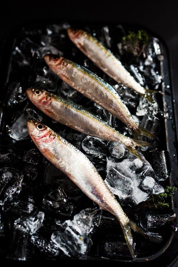 Sardines fraîches sur le lit de glace image libre de droits