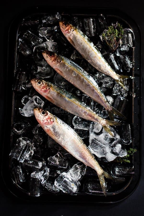 Sardines fraîches sur le lit de glace images stock