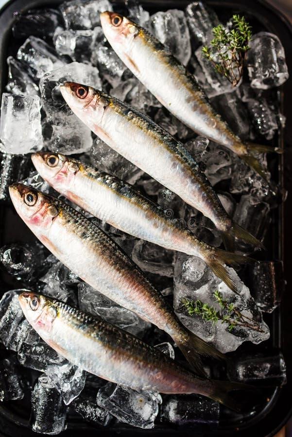 Sardines fraîches sur le lit de glace photo libre de droits