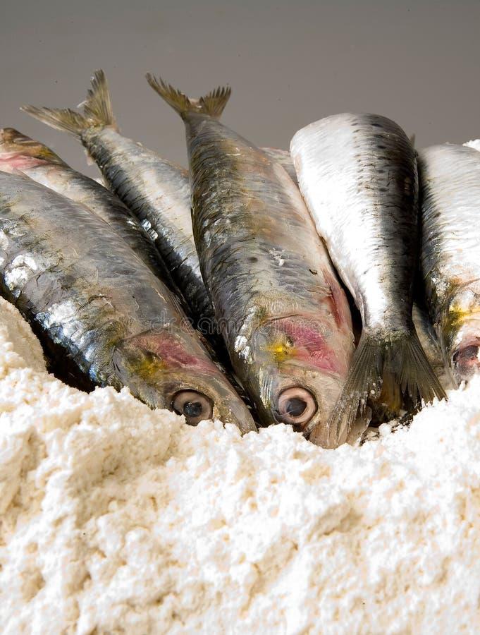 Sardines fraîches sur une pile de farine photographie stock libre de droits