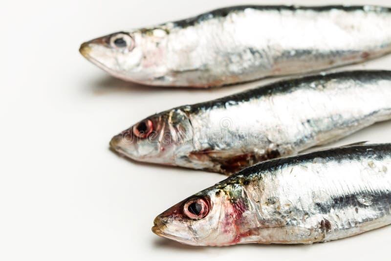 Sardines fraîches sur une table blanche photographie stock