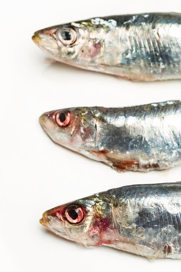 Sardines fra?ches sur une table blanche photo libre de droits