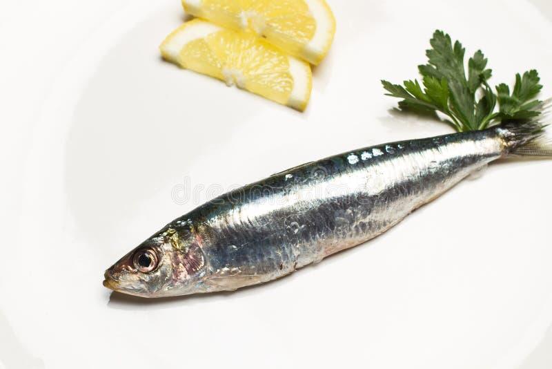 Sardines fra?ches d'une plaque photo libre de droits
