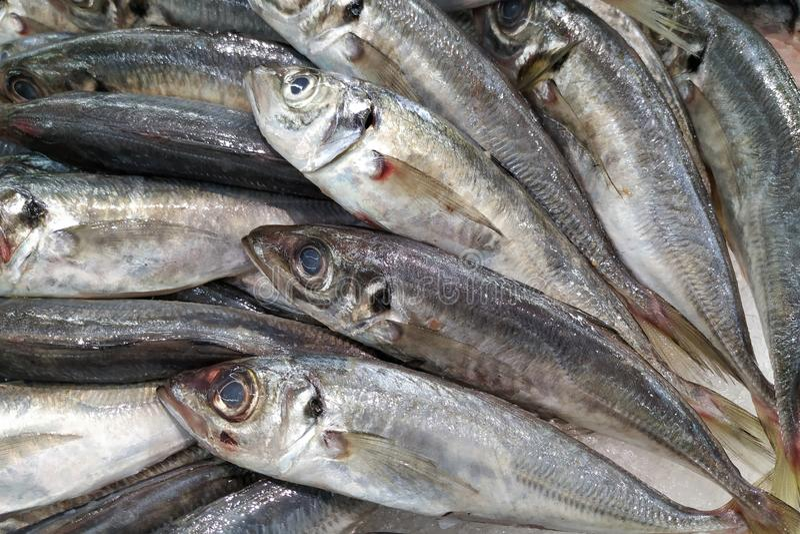 Sardines fra?ches Poissons ? vendre sur le march? photos stock