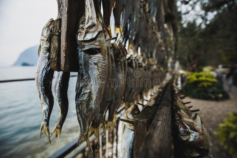 Sardines hang in the dryer, on the shore of Lake Iseo. Italy royalty free stock photo