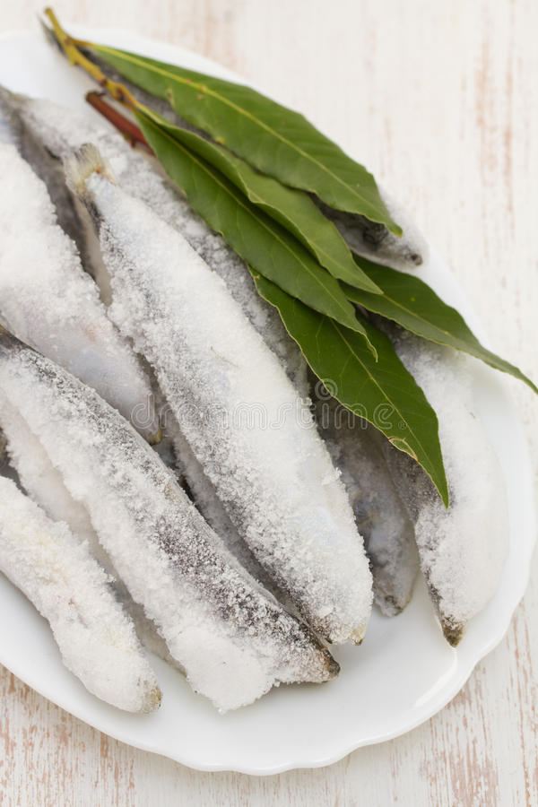 Sardines in ice on white dish. On white background royalty free stock photography