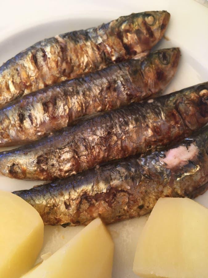 Sardines portugaises grillées photo stock