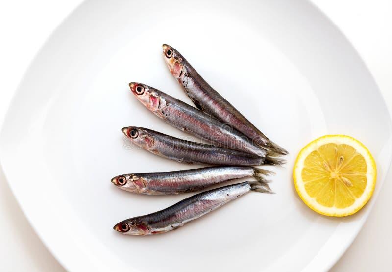 Sardines. Raw Sardines with lemon slice on white plate royalty free stock image