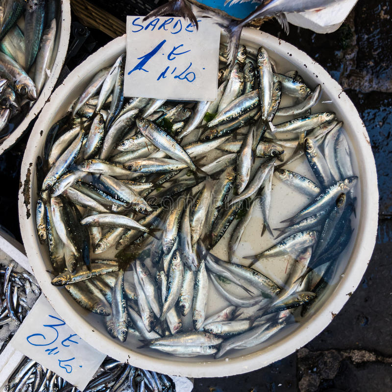 Sardines for sale. As seen in a market in Italy royalty free stock photography