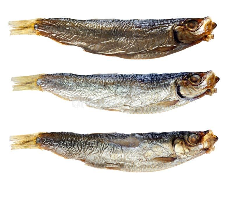 Sardines sur le fond blanc photo stock