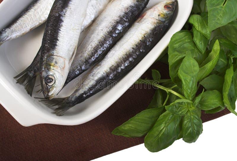 Sardines voor het koken royalty-vrije stock afbeeldingen