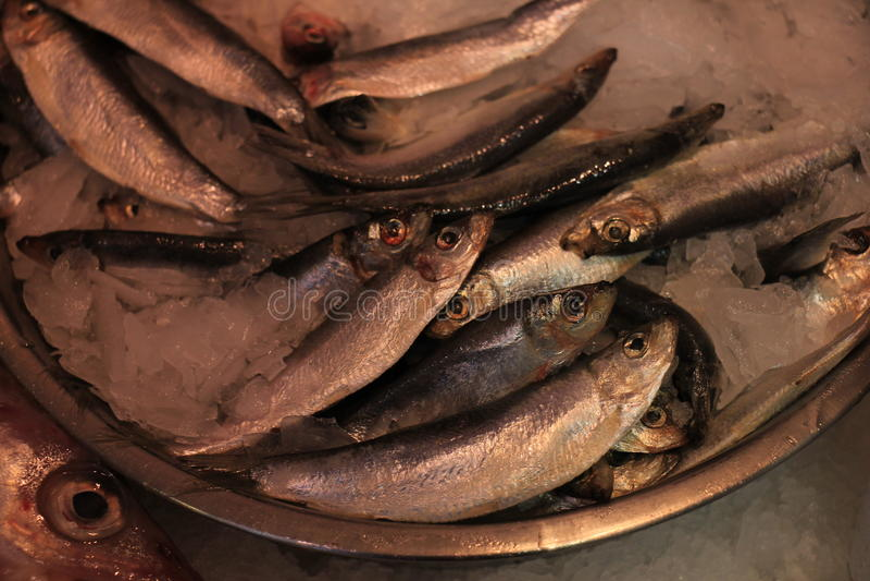 Sardinhas frescas no gelo esmagado fotos de stock royalty free