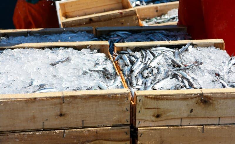 Sardinhas no mercado foto de stock royalty free