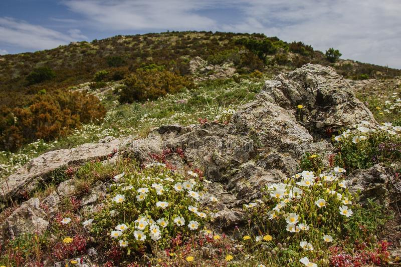 Sardinia flowering hillside royalty free stock photos