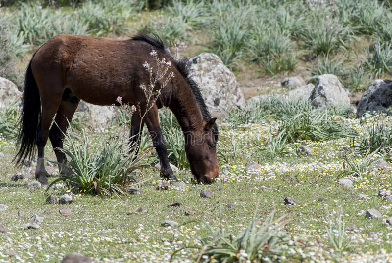 Sardinia. Giara koń obrazy royalty free