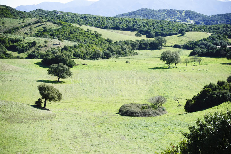 Sardinia.Green Valley royalty free stock photography