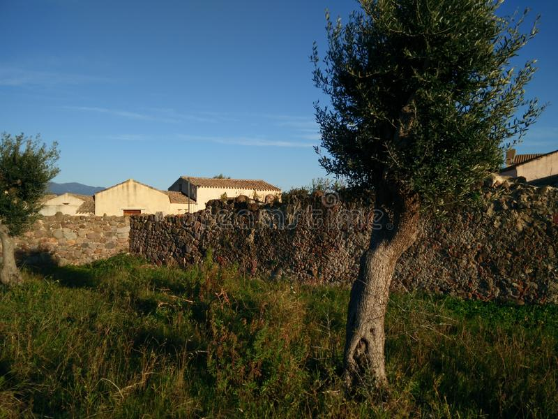 Sardinia. Traditional architecture. Rural view with old traditional houses, a wall of stones and a plant of wild olive tree, in the medieval village of Tratalias royalty free stock photos