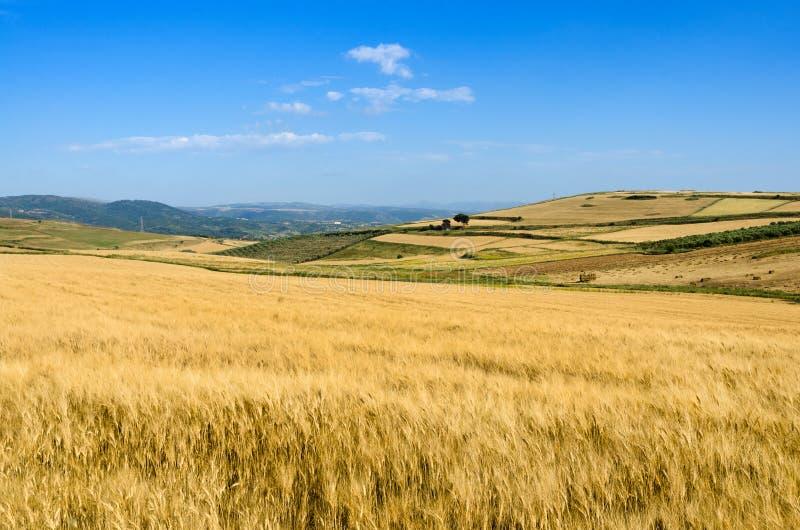 Sardinia, Trexenta fotografia de stock royalty free