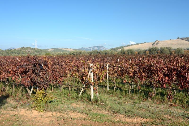Sardinia. Vineyard stock photos