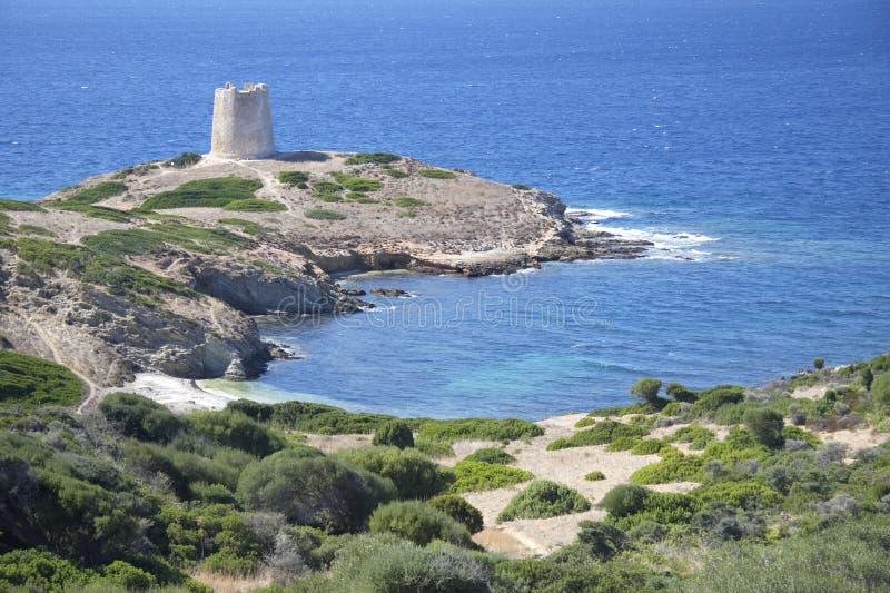 Sardinige stock afbeelding