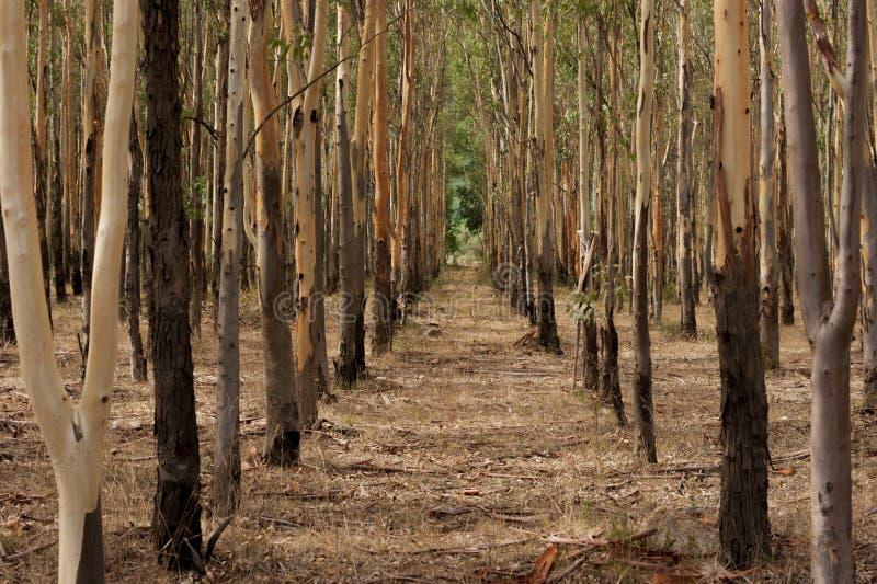 sardynia drzewo obrazy royalty free