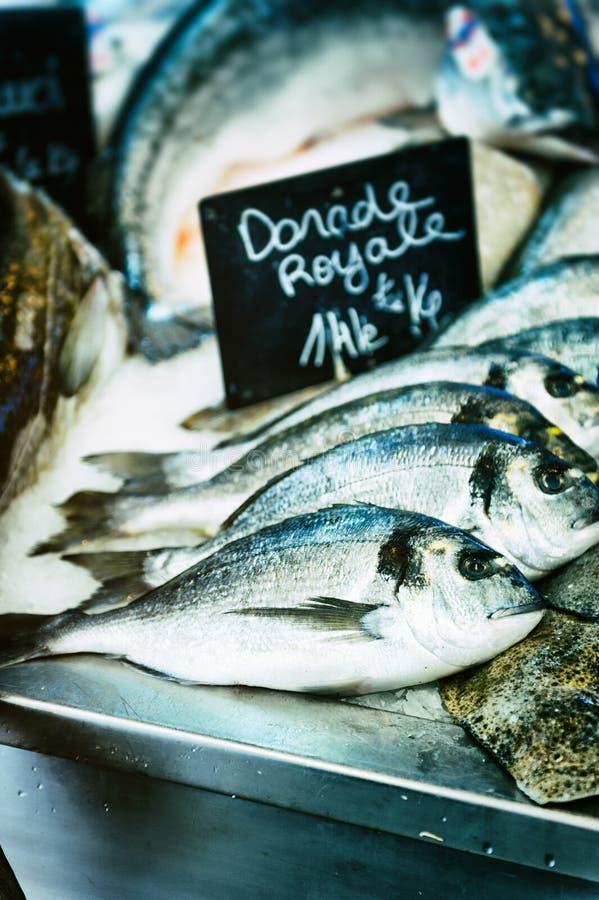 Sargo fresco no mercado de peixes imagens de stock royalty free
