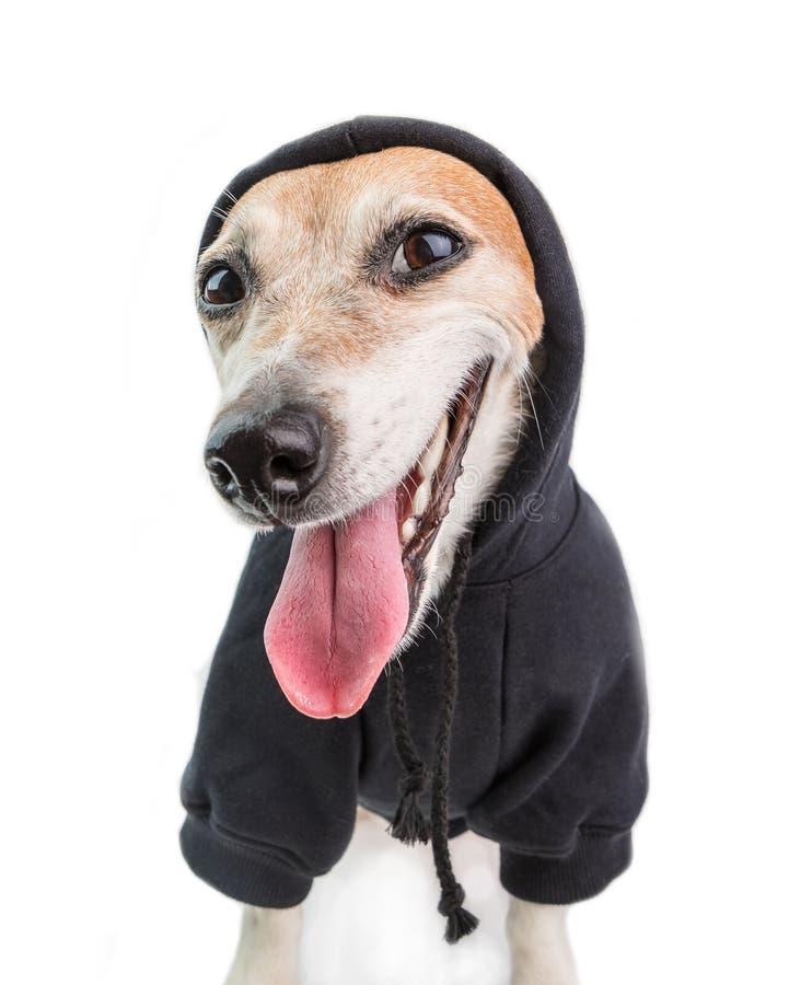 Sarkastisches lustiges Hundelächeln Schwarze Hoodierapperart Weißer Hintergrund stockbilder