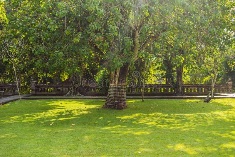 Sarongs sur l'arbre sacré, Bali, Indonésie images libres de droits