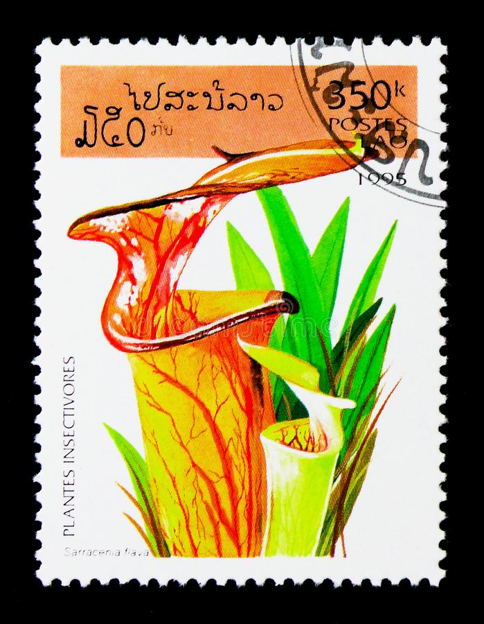 Sarracenia flava, Insect-eating plants serie, circa 1995. MOSCOW, RUSSIA - NOVEMBER 26, 2017: A stamp printed in Lao People's Democratic Republic shows stock photos