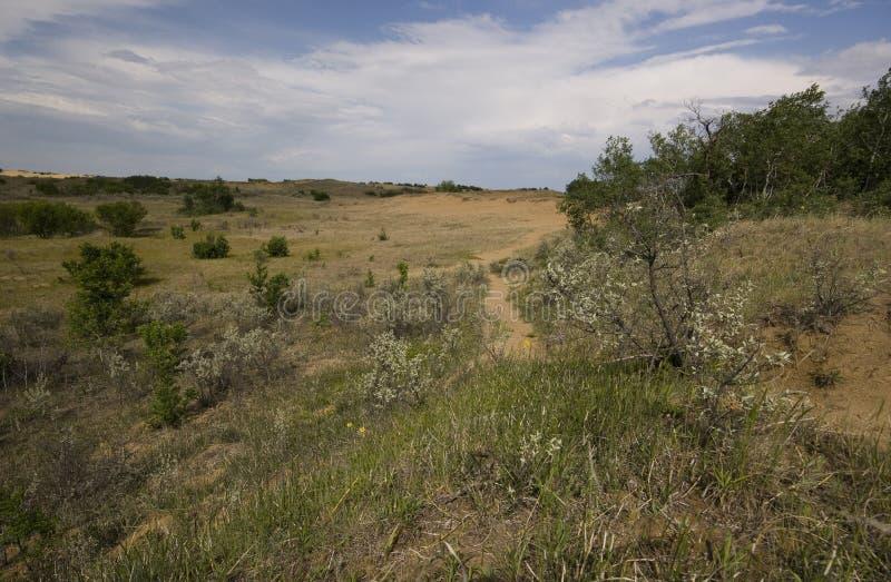 Saskatchewan piaska diuny fotografia stock