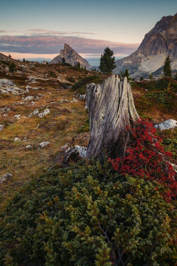 Sass de Stria, Falzarego Pass, Dolomites, Italy. Alpine, alps, altitude, beautiful, blue, cinque, cloud, cold, europe, flower, fog, forest, glacier, grass stock images