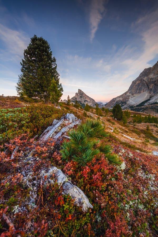 Sass de Stria, Falzarego Pass, Dolomites, Veneto, Italy. Alpine, alps, altitude, beautiful, blue, cinque, cold, europe, flower, fog, forest, glacier, grass royalty free stock photo