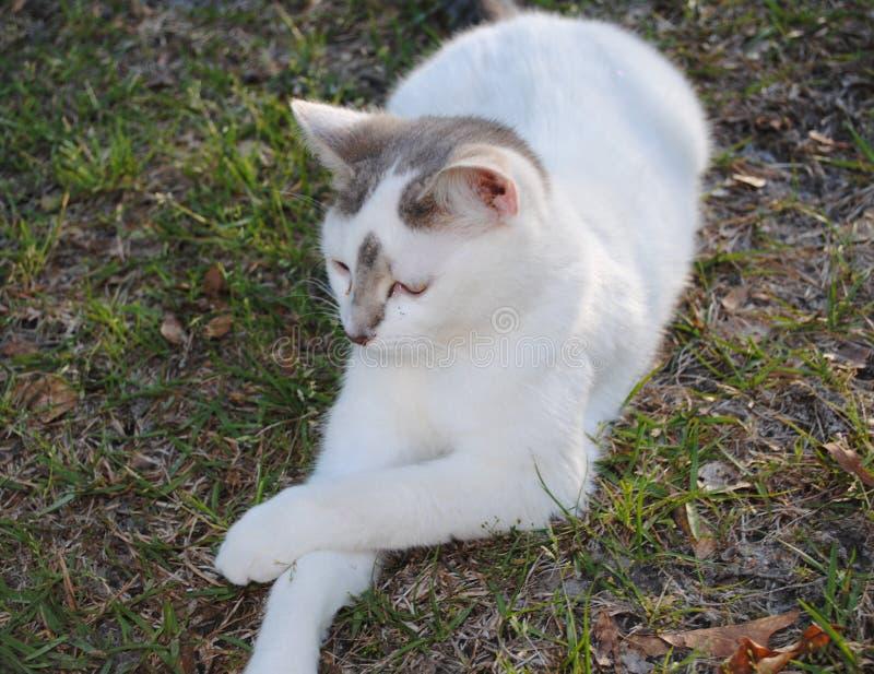 Sassy Kat al prim en juist royalty-vrije stock foto