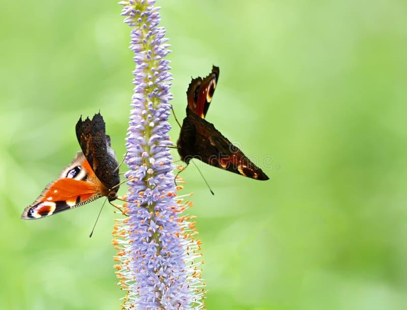 Sat na mosca da flor cansado foto de stock royalty free