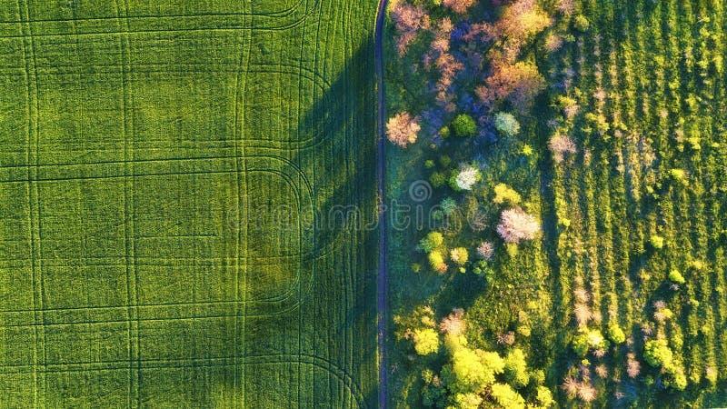 Satellietbeeld bij de tuin en het gebied Landbouwlandschap van lucht Gebied en tuin Landbouwbedrijf in de zomertijd Hommelfotogra stock foto