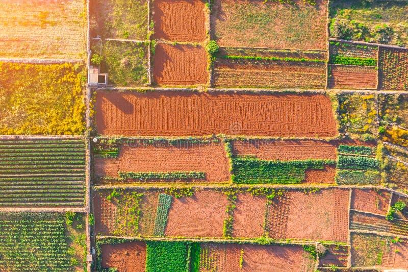 Satellietbeeld geometrische vormen van percelen landbouwgrond van verschillende gewassen in groene, bruine, oranje kleuren royalty-vrije stock foto's