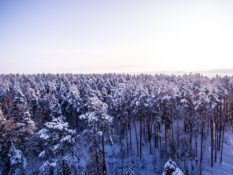 Satellietbeeld op de winter bosbovenkanten van sneeuw van de boomtak en vorst meren op achtergrond De Mening van het Oog van voge royalty-vrije stock foto's