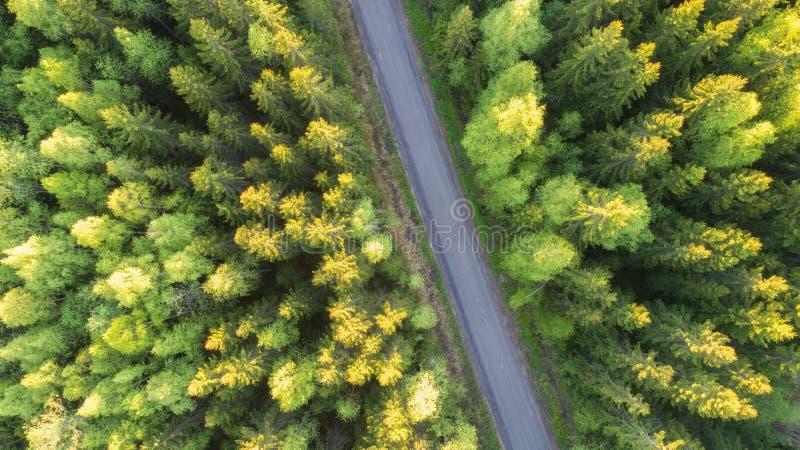 Satellietbeeld van bos en weg royalty-vrije stock afbeelding