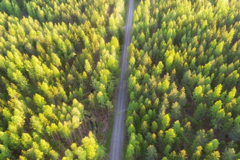Satellietbeeld van bos en weg royalty-vrije stock foto