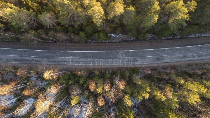 Satellietbeeld van de lente landelijke weg in geel pijnboombos met sneeuw in landelijk Rusland stock afbeelding