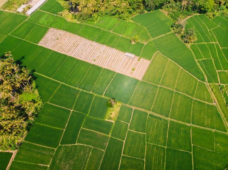 Satellietbeeld van groene padievelden Tropische aard in Bali royalty-vrije stock fotografie